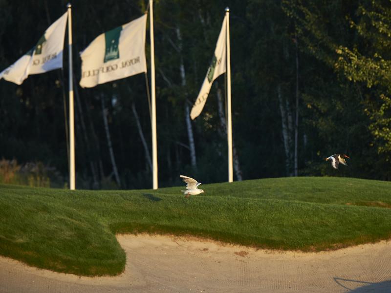 Golfv22019